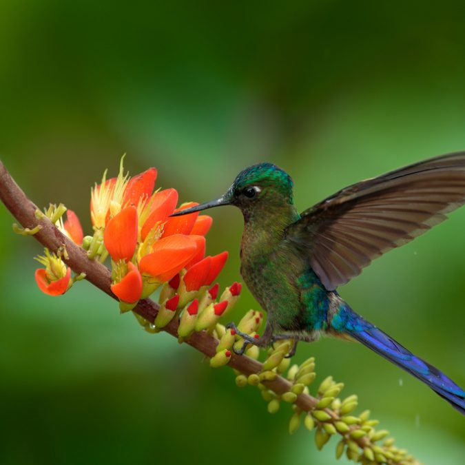 Ruta colibríes de colombia RUTAS DE ORIGEN FROSCH